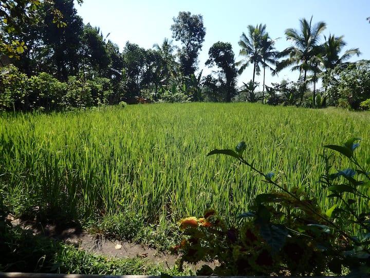 Farmerstay in the Risefield