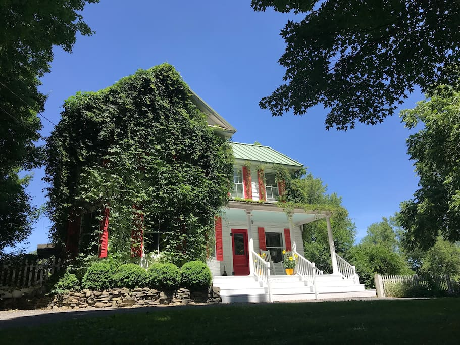 Beautiful Virginia Creeper covers the farmhouse in summer.