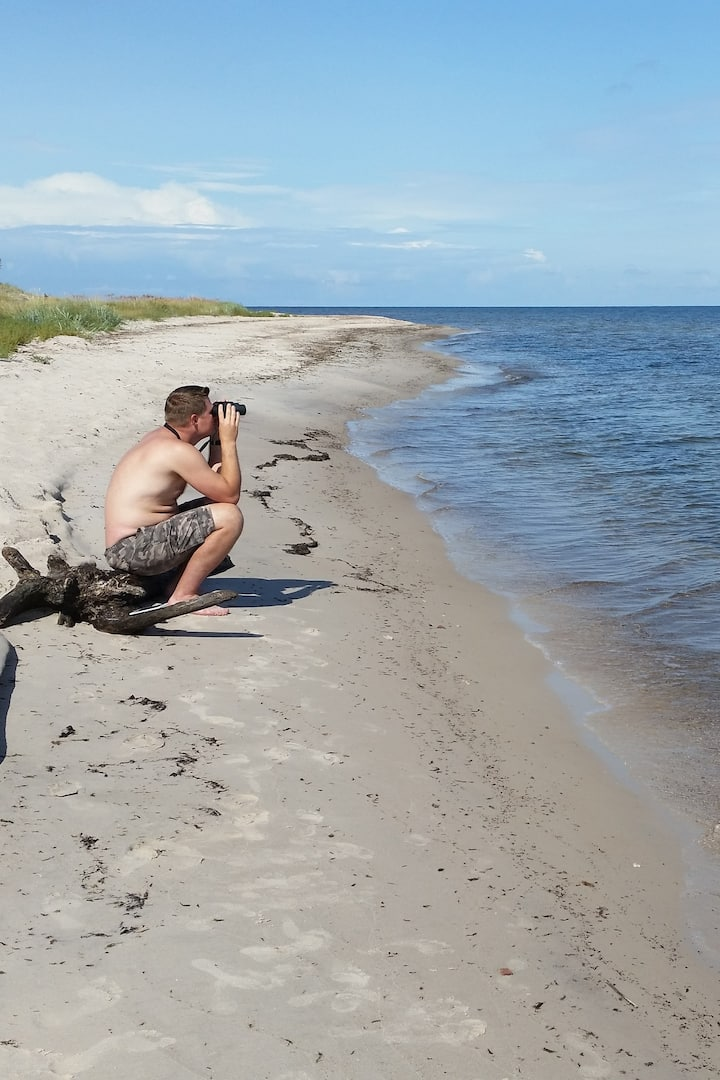 Grey seal watching. Ruhnu island