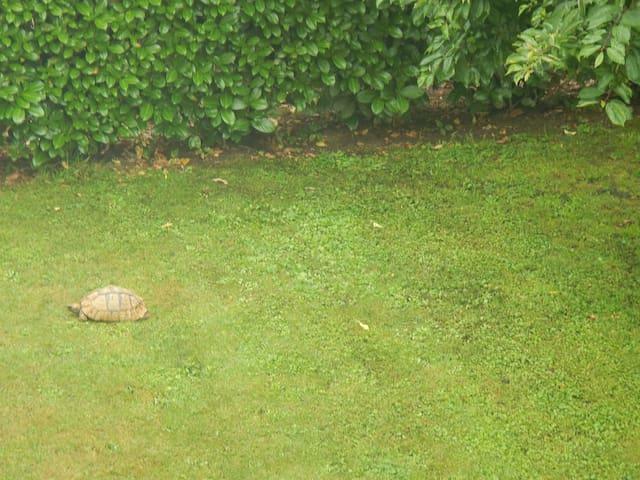 Giardino visto dal balcone con la nostra tartaruga