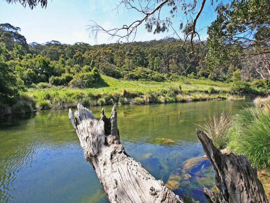 Pristine Kennett River right at your doorstep