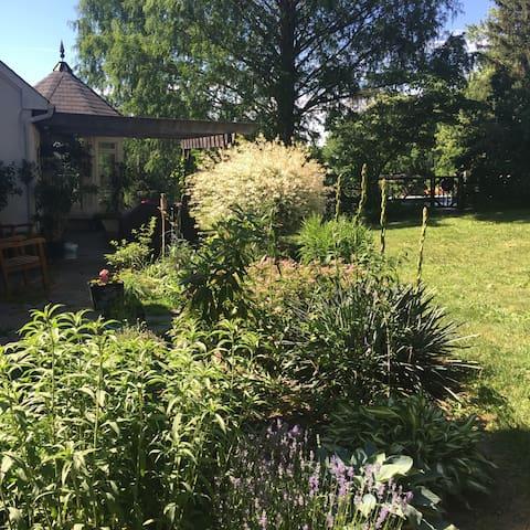 Mature garden.