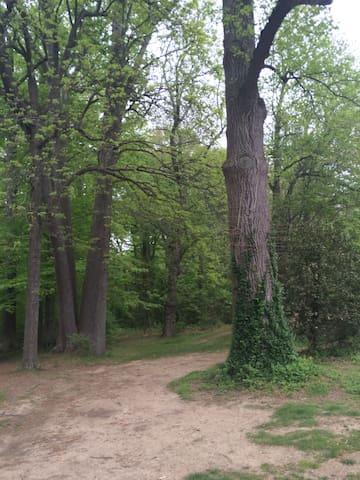 Nearby Arboretum