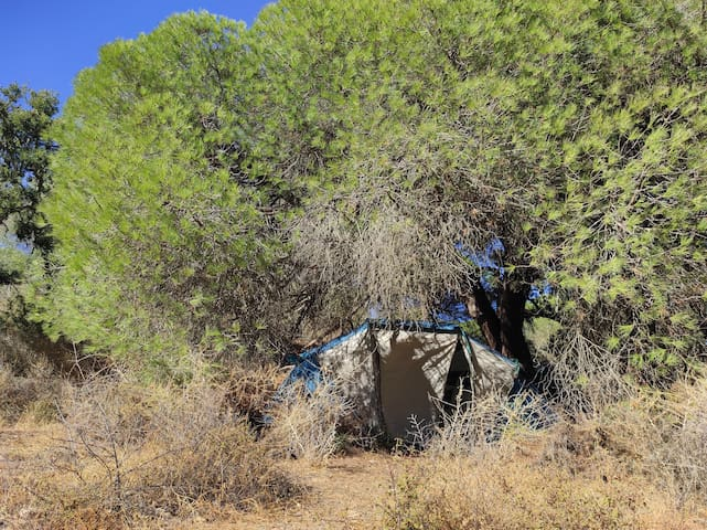 Free Spirit - Wild Camping (4 persons - 2 rooms)