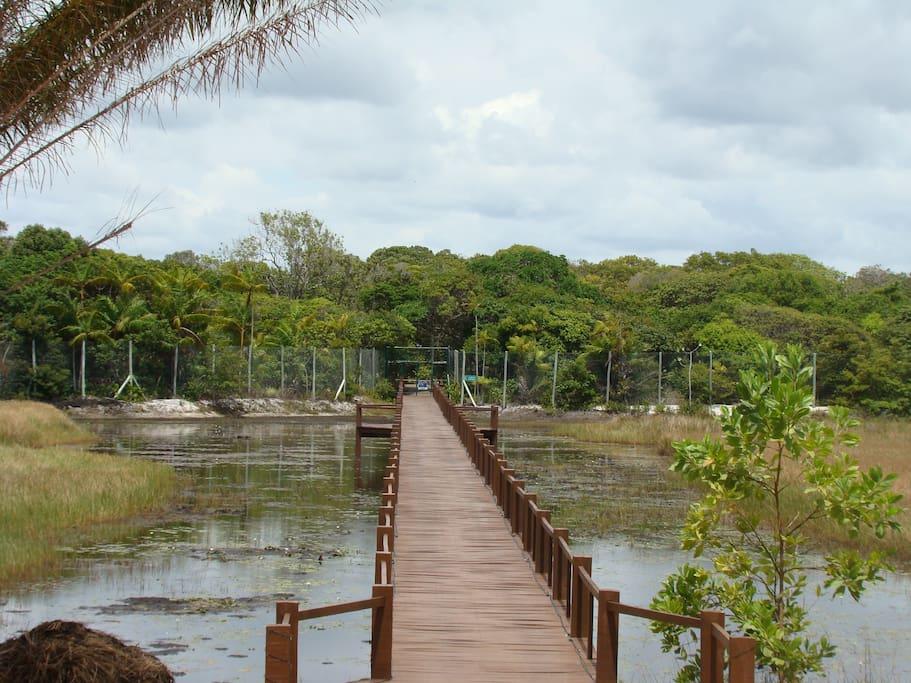 bosque que leva a praia