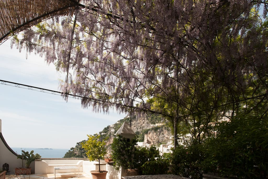Very large Terrace with wisteria covered gazebo