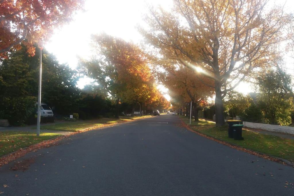 Our nice quiet street