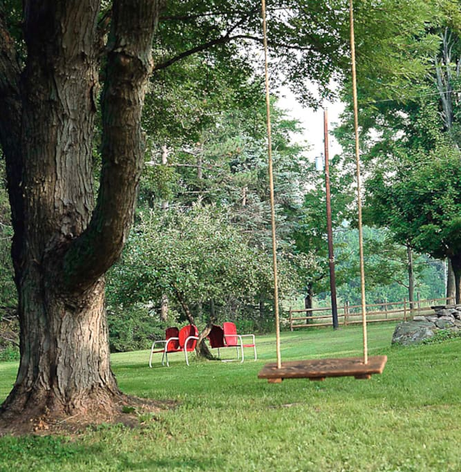Our tree swing, looking at our apple tree.