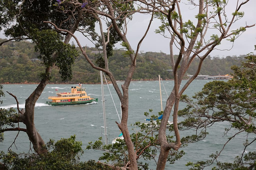 Actual view from garden - looking across to Taronga Zoo ... watch the ferries go by.