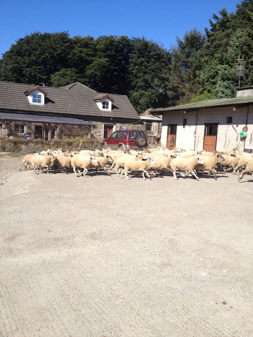 Sometimes sheep just outside!