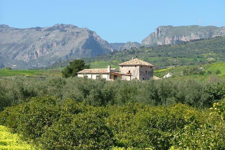 Holiday home on an estate, surrounded by citrus and olive trees, 7 km from the sea.