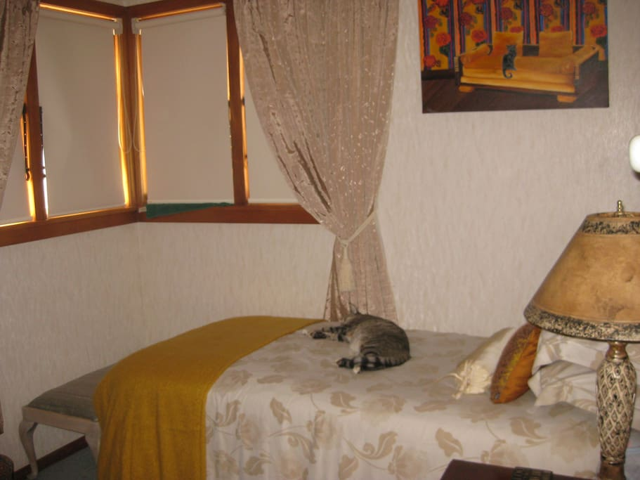Single guest bedroom with Biggles the friendly feline