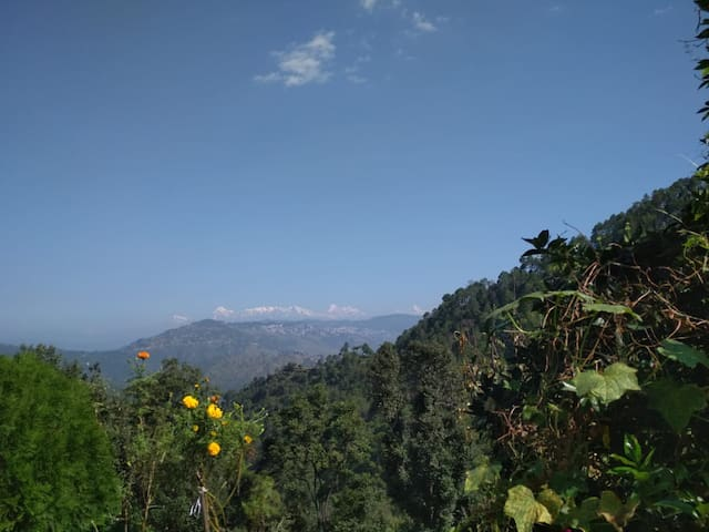 morning chirps sorrunded by himalaya Home Stay