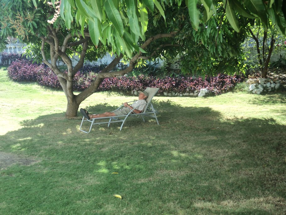 Relaxing under the mango tree