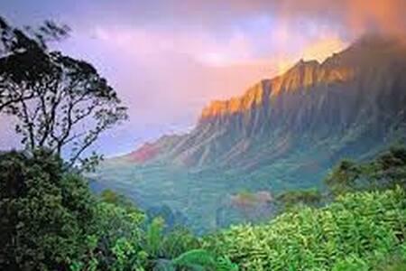 Kauai's Lucky Elephant Escape! - Kapaa