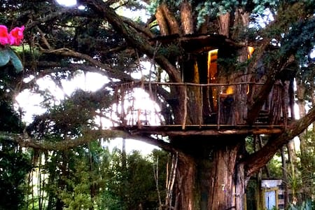 Treehouse in totara heaven - Wellsford