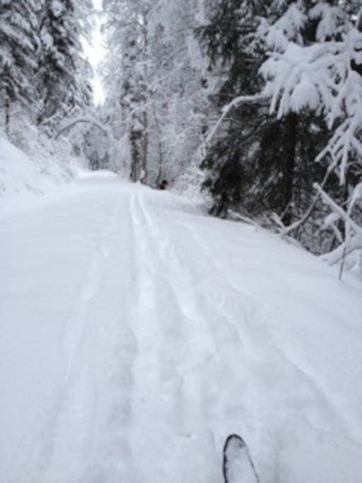 Backcountry skiing right onto Flathead Nat'l Forrest out your door