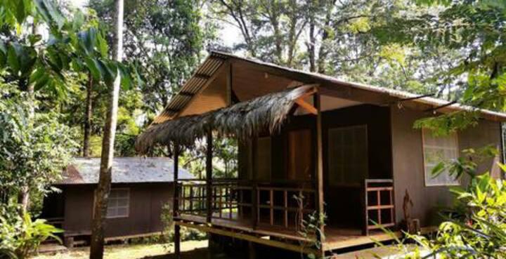 Gringo's jungle rooms