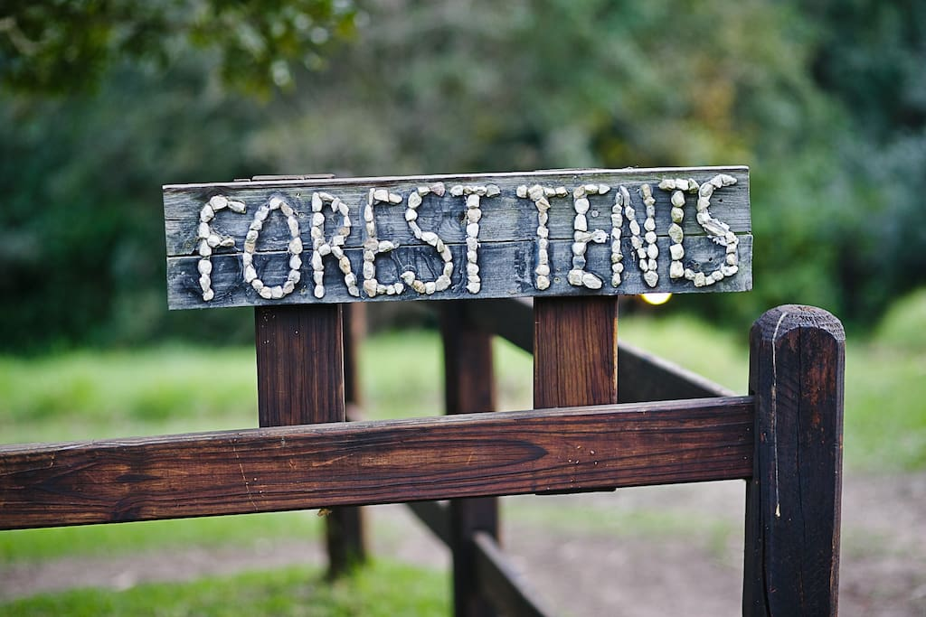 Here you are . . . the magical mystery forest tour