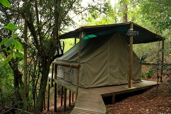 Magical Forest Tent / 1 - Knysna - Nature lodge