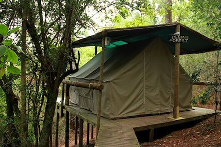 Magical Forest Tent / 1 - Knysna - Tent
