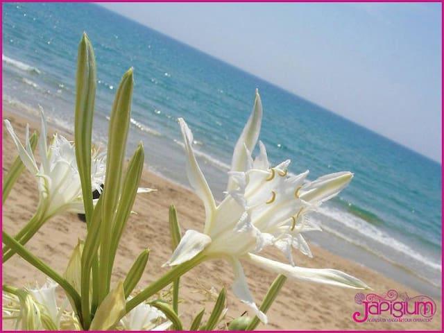 Vacanze in Villa a 2 passi dal Mare - Le Cannella - Dom