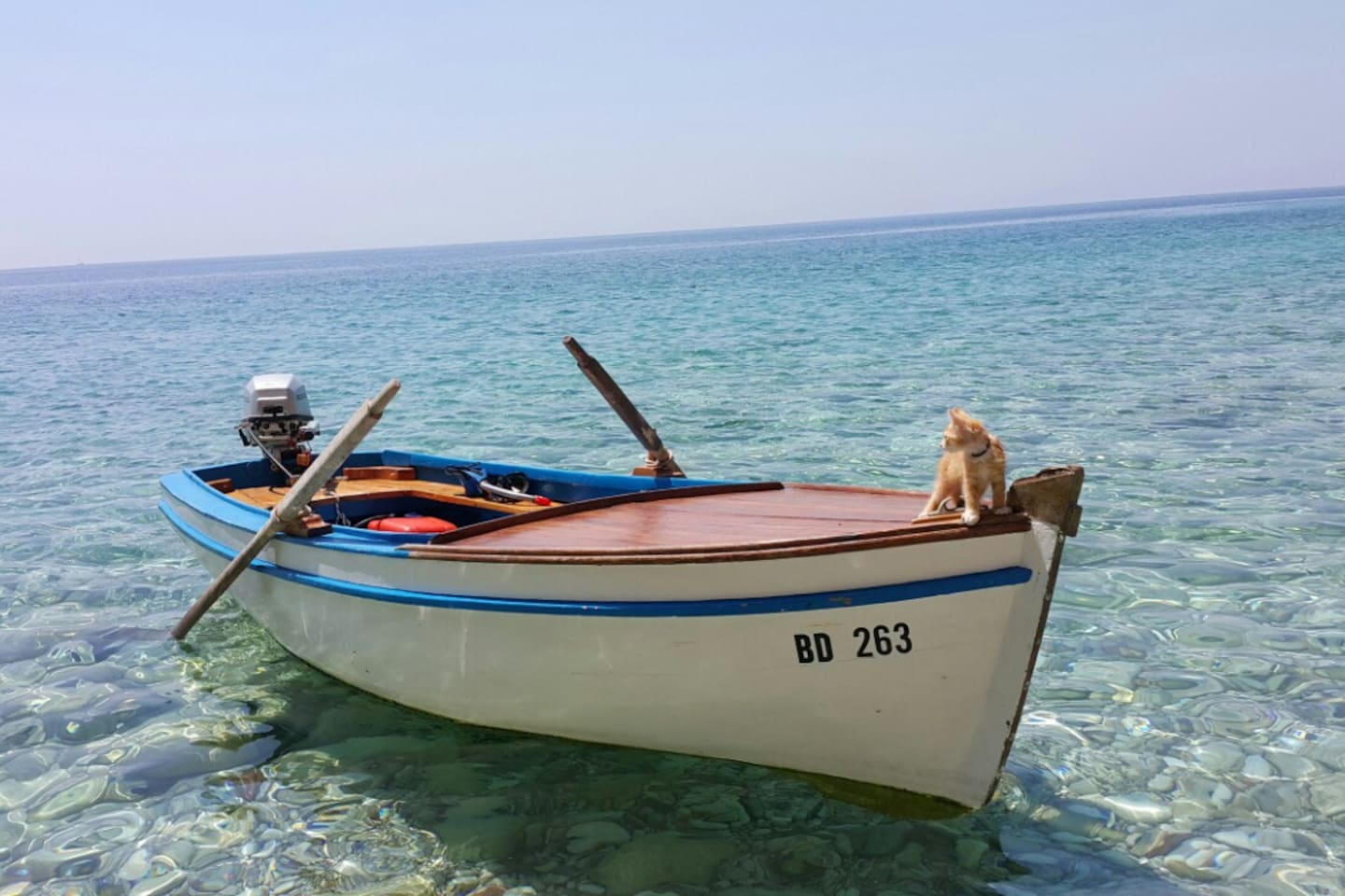 Tošo the cat leading the way to the Fisherman's Home!