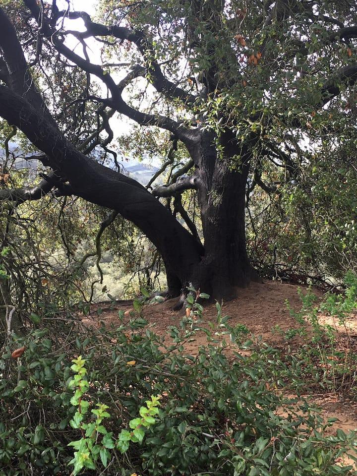 """""""Sage's tree"""""""