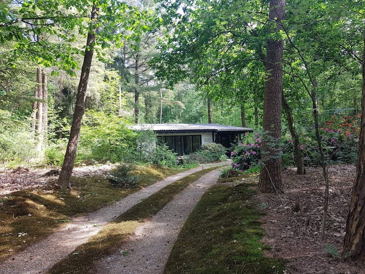 Knusse cottage in het bos met totale privacy