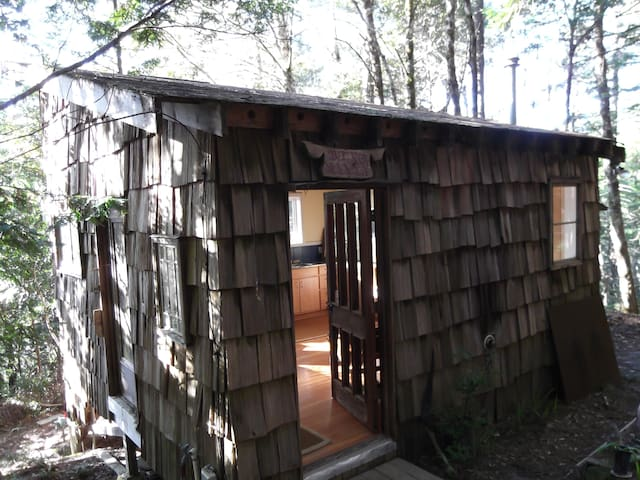 Thoreau cabin/woods/write your book