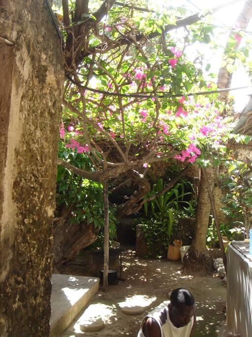 The garden as you enter Shuwari