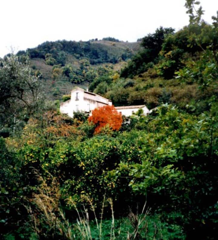 Farm-house in Sicily in the nature