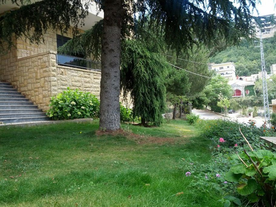 A cedar tree in the garden
