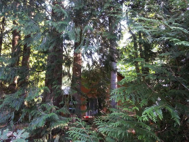 View of home from the fully-fenced, wooded backyard