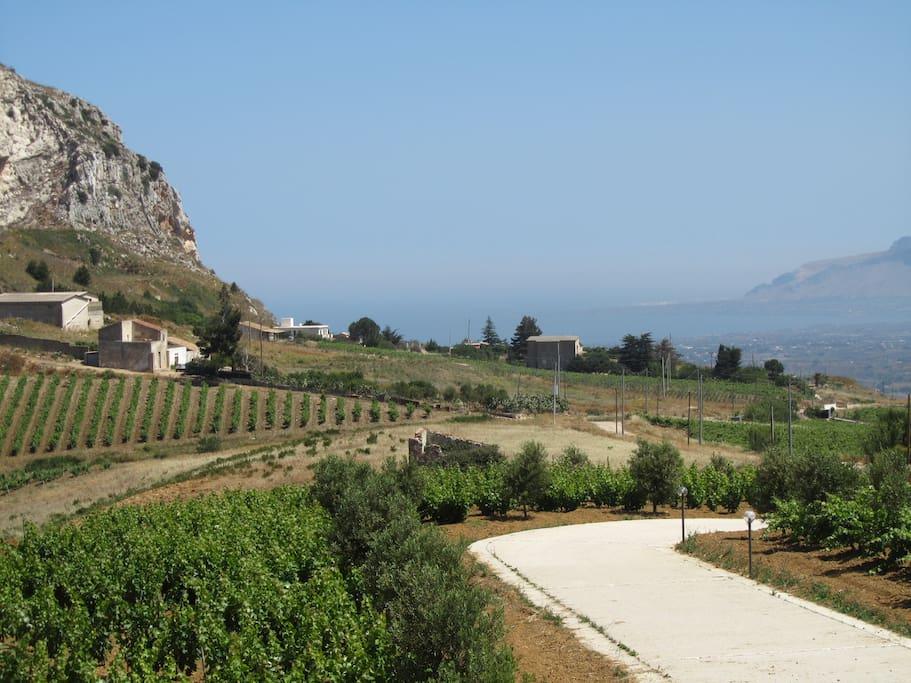 Vista dalla terrazza sul podere, sul golfo di Castellammare e Capo Rama