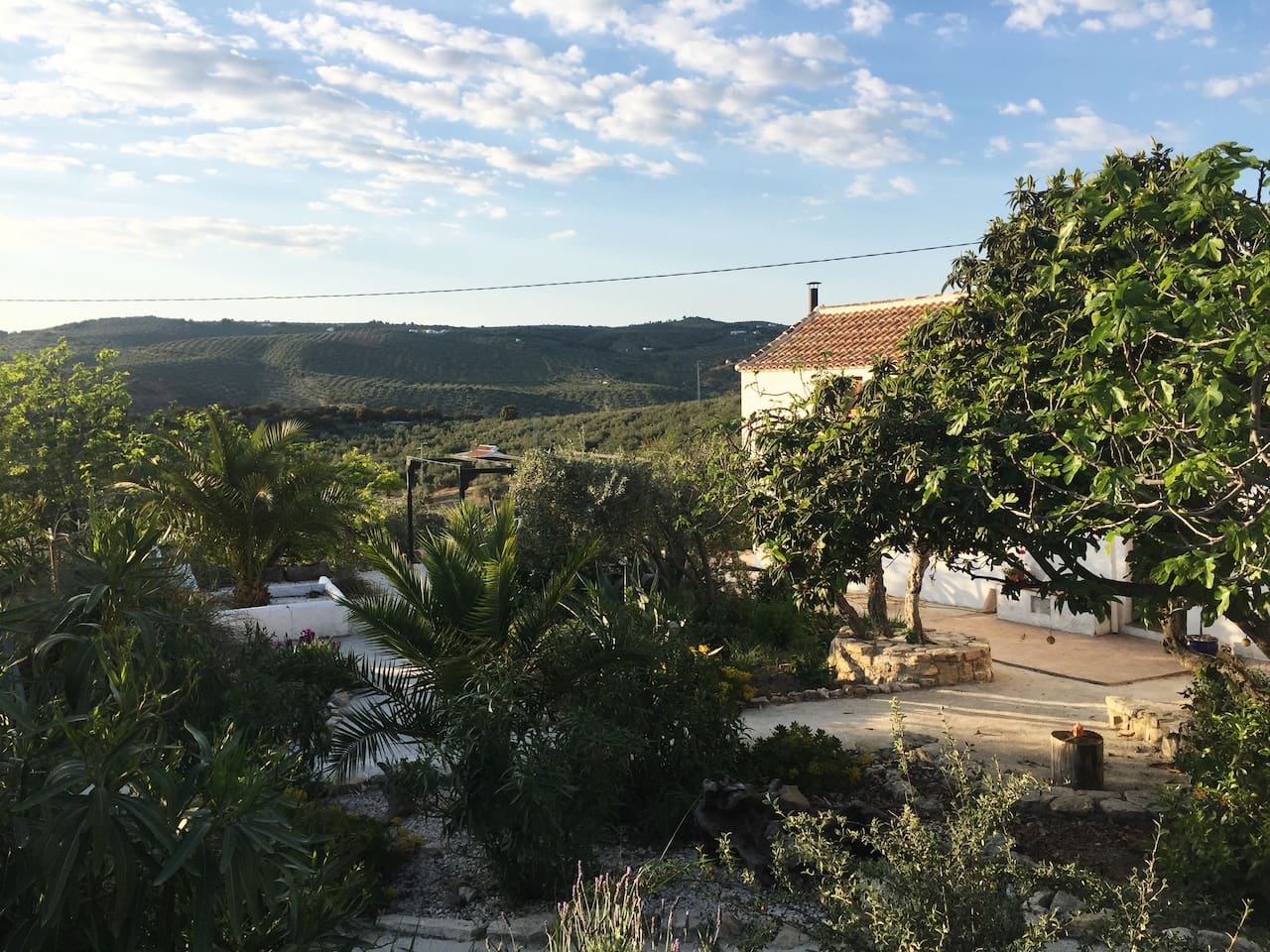 Cortijo and garden with views of the hills and surrounded by olive groves.