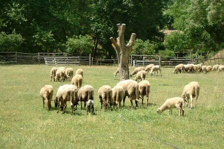 El Moli de Can Aulet Turismo rural - Arbúcies - House - 2
