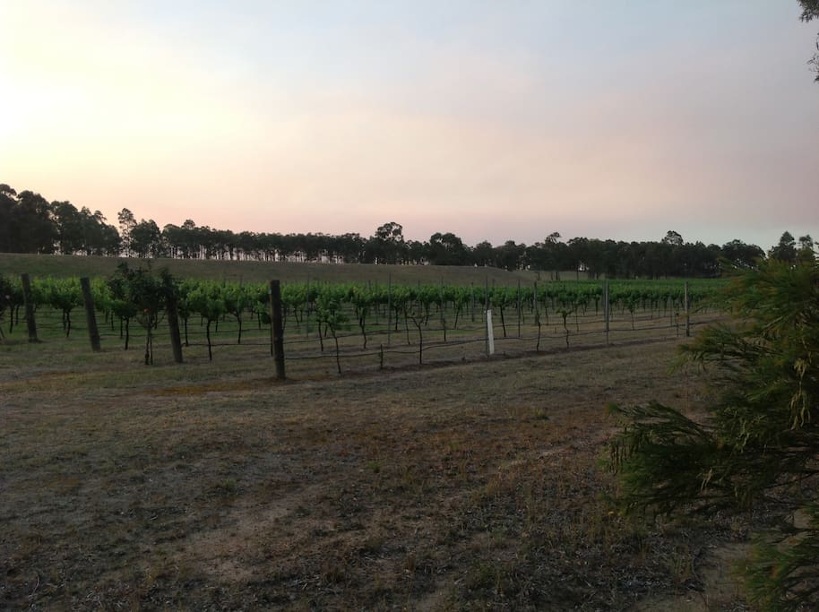 View of winery from back verandah