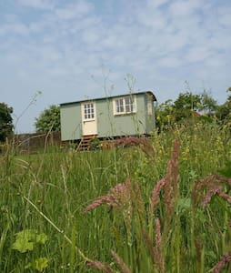 The Shepherds Hut - Musbury - Hut