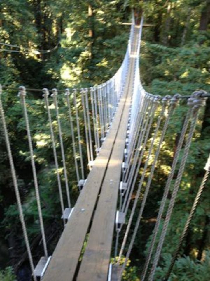 Redwood Canopy Tour 6 minute walk from the house, in Mt. Hermon.