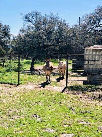 Getaway Ranch - a unique hill country escape.