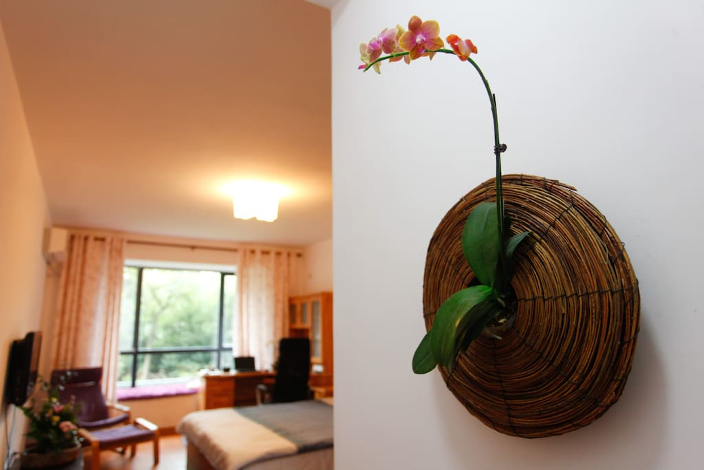 welcome orchid