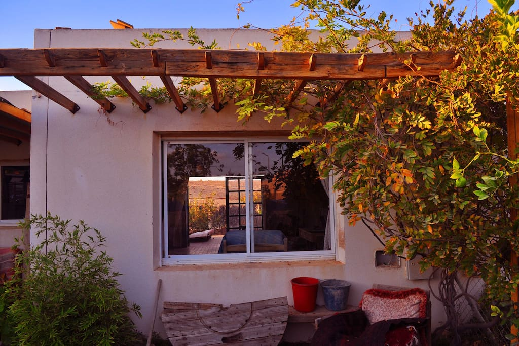 Front view - the sun is falling softly on the windows, through  the grapevine growing on the wall