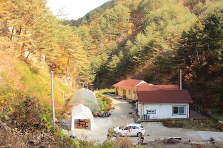 소나무언덕 - Yeongwol-gun - Guesthouse