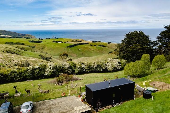 Dunedin's Slice of Paradise