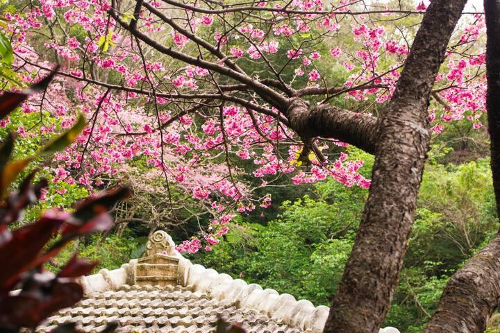 美麗的自然和星空!日本老房子,放鬆寬敞留! 美麗海水族館&戀之島附近