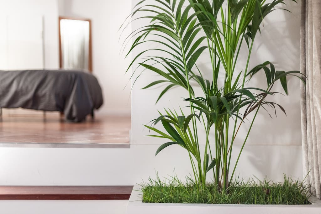 SILENT SUITE DESIGN - Living room detail - kentia plant