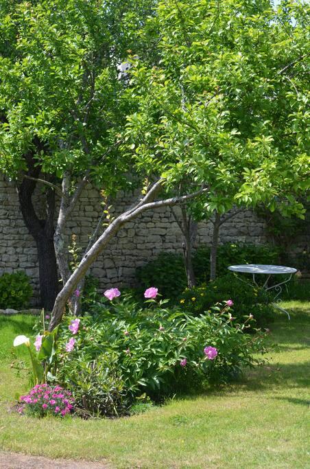 Jardin avec pruniers, olivier, eucalyptus, figuier et bambous