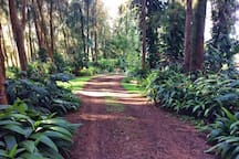 The Lush Driveway leading down onto the property