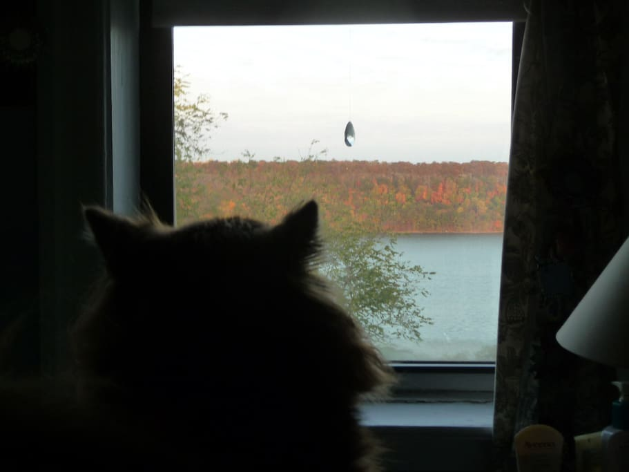 View from the bedroom window: fall foliage on the Palisades